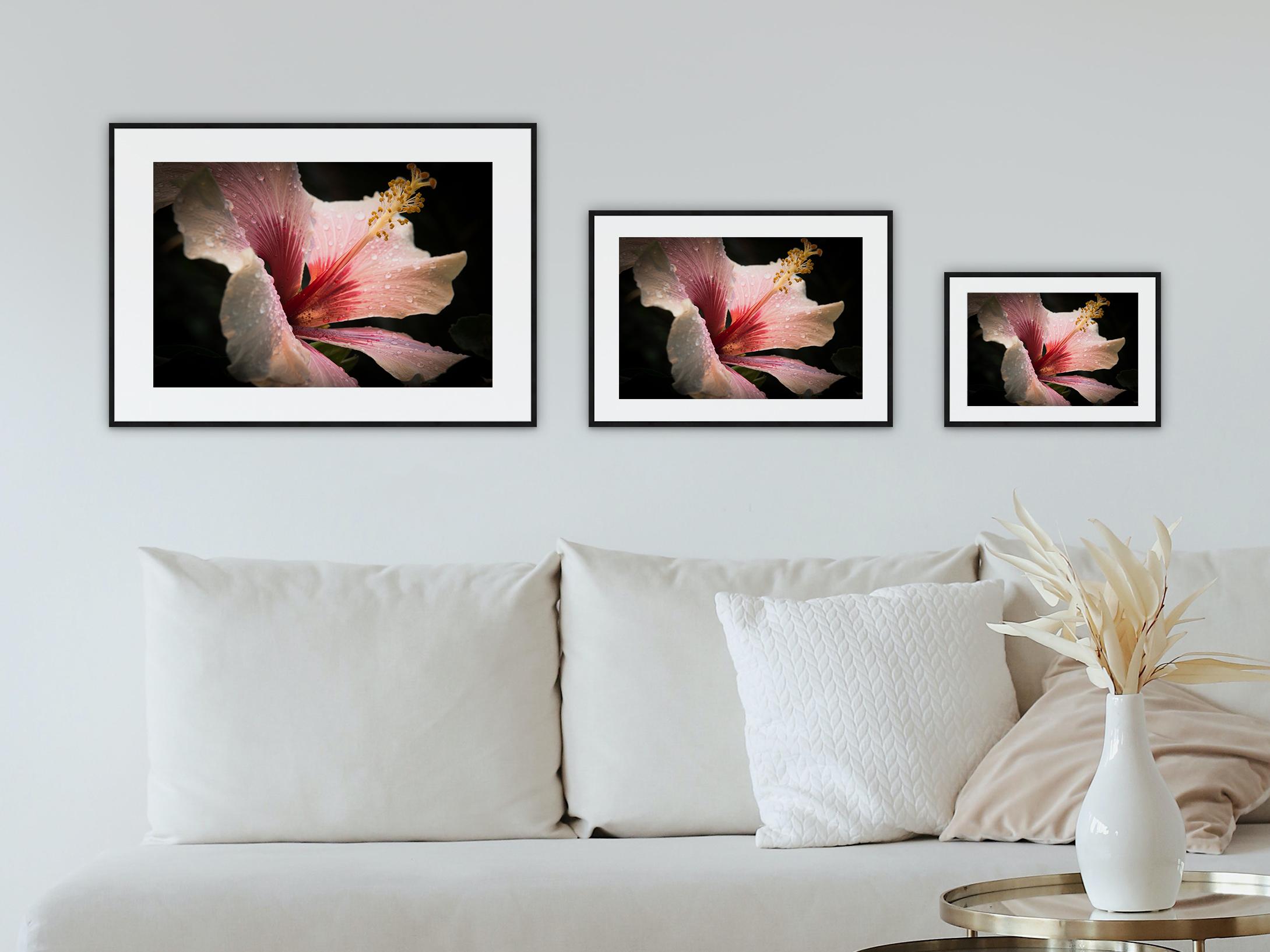 Hibiskusblüte mit Tropfen